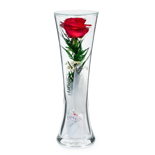 Красная_роза.jpeg