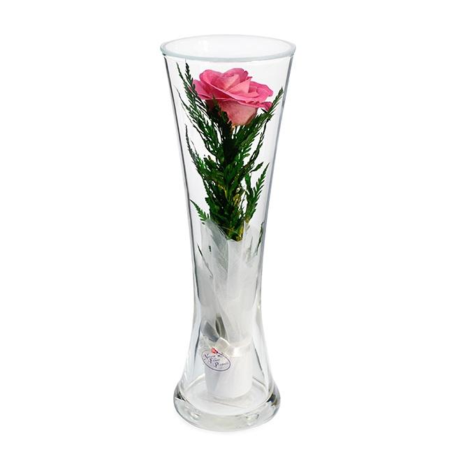 Розовая_роза.jpeg
